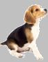 dogico2