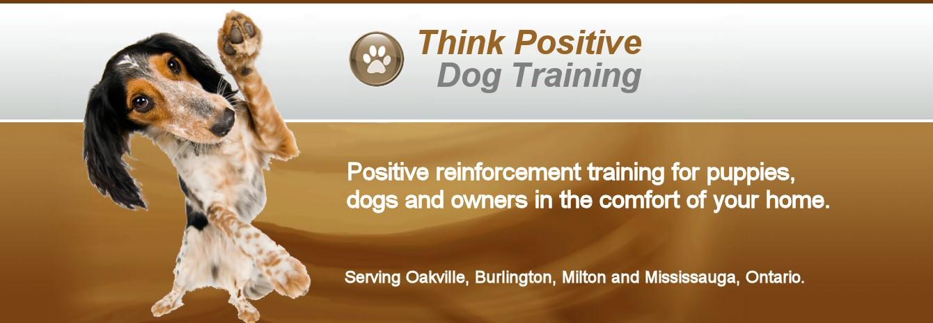 Think Positive Dog Training