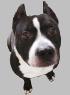 dogico1