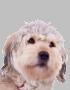 dogico3