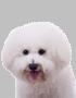 dogico6